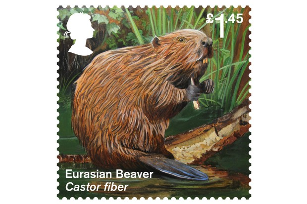 Beaver204002520Stamp-f61d06c