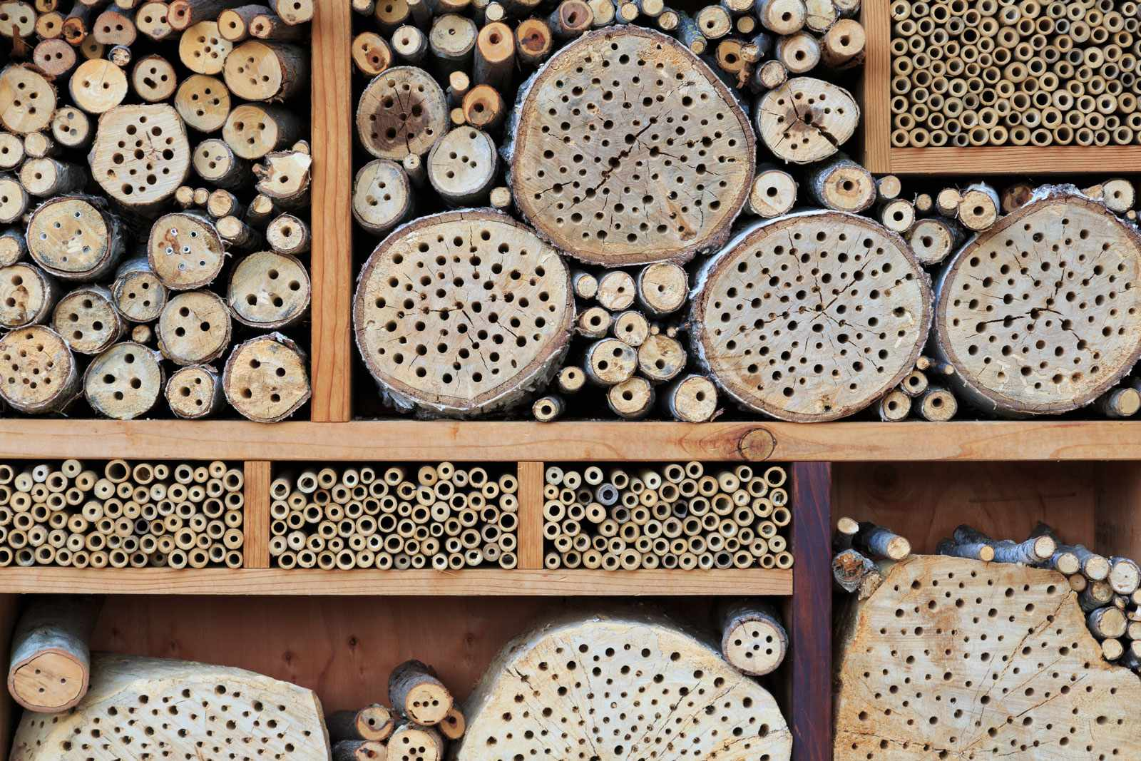 Bee-hotel-5bdcfd8