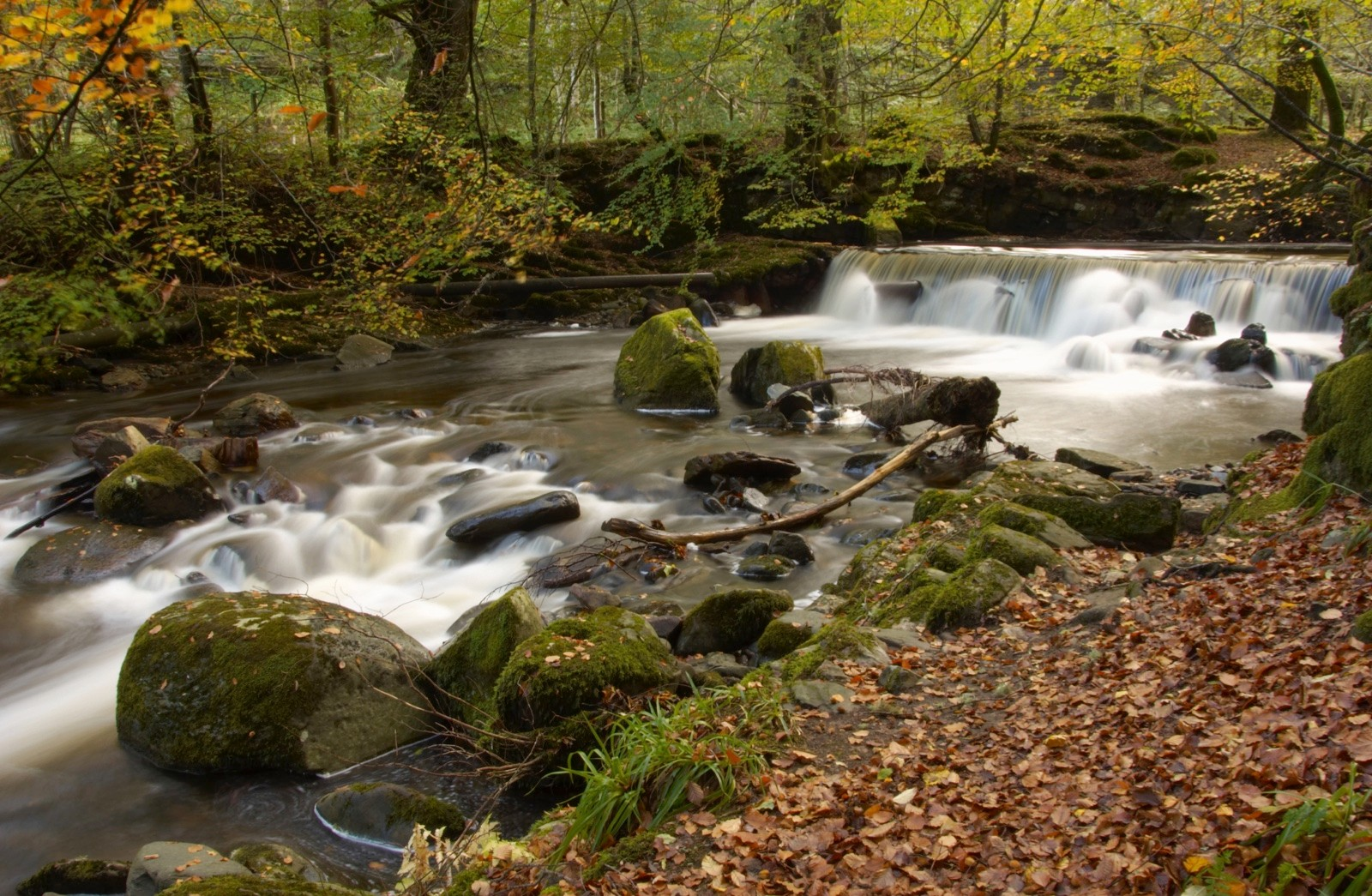 Birds of Aberfeldy – The gorge was once known as the Den of Moness ©Getty