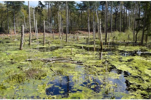 Blakemere Moss