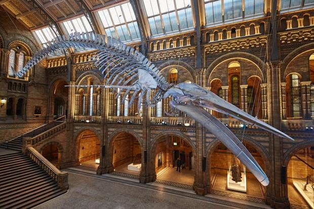 Blue-Whale-Hintze-Hall-10-385f92f