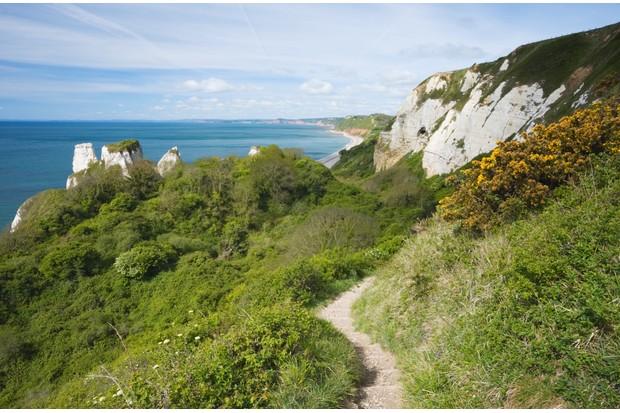 South West Coast Path at Hooken Cliff heading towards Branscombe. Devon. England. UK.