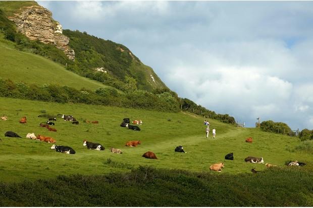 Walkers on the green coastal hills of Devon, near Branscombe Beach