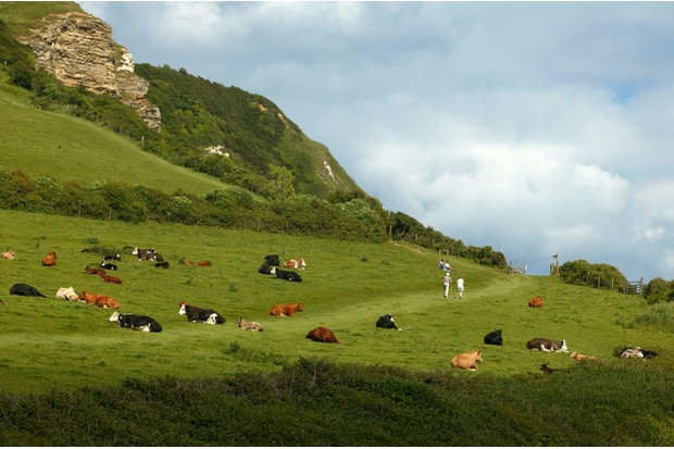 Walkers on the green coastal hills of Devon, near Branscombe Beach
