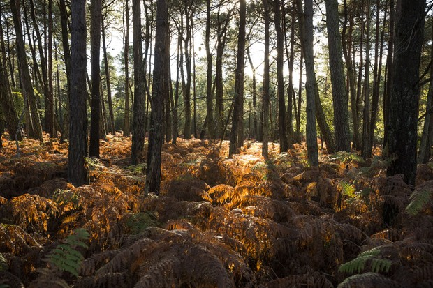 Brownsea-Ferns-©National-Trust-Images-Chris-Lacey-1-9077059