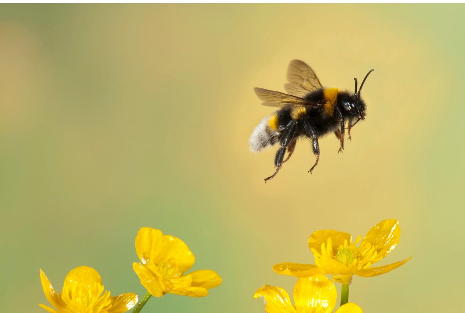 Bumble-bee-b9070df