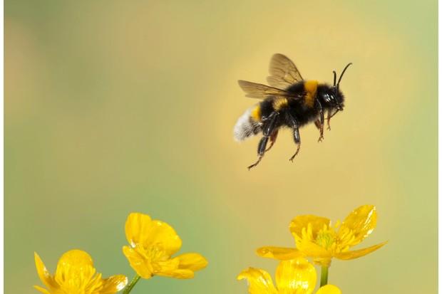 Bumble20bee-9943306