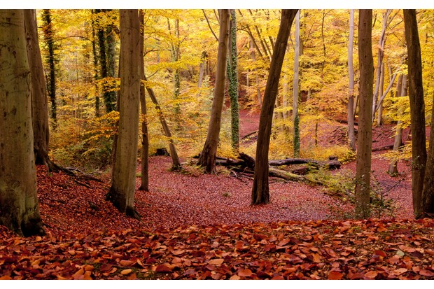 Burnham Beeches thrives with wildlife throughout the year – autumn is one of the busiest months, with many animals foraging for food for winter