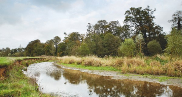 A river in Devon - site of a local beaver population