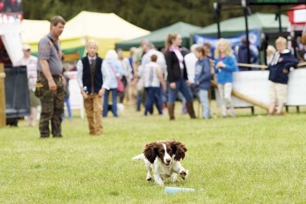 COUNTRYFILE_LIVE_DOGS_004-a6287d7