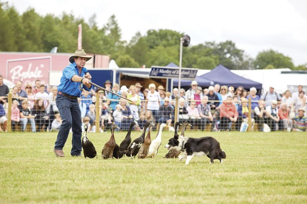 COUNTRYFILE_LIVE_DOG_AND_DUCK_SHOW_014-e9a7ec7