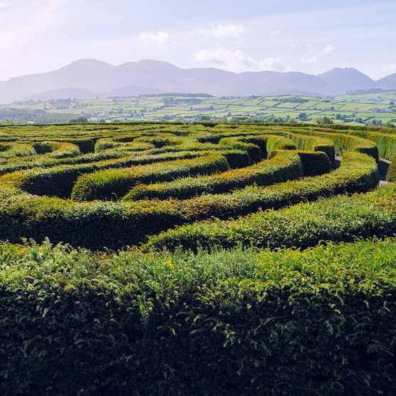 Castlewellan Maze