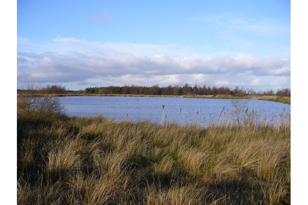 Chapmans_Well_Nature_Reserve_-_geograph.org_.uk_-_318793-415728a