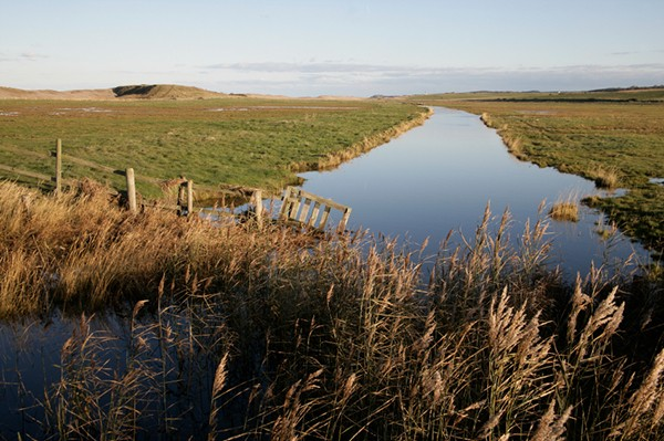 Cley marshes nature reserve, Norfolk