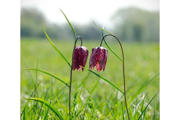 Cricklade-flower-20ac173