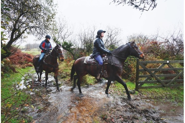 Horseriding Dartmoor