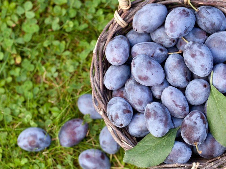 October foraging guide: best foods to find and recipe ideas