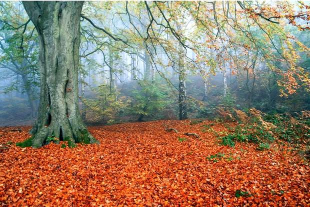 Delamere-Forest-autumn-35af231