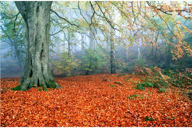 Autumn leaves in Delamere Forest