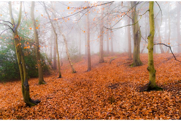 Misty autumn day in Delamere Forest