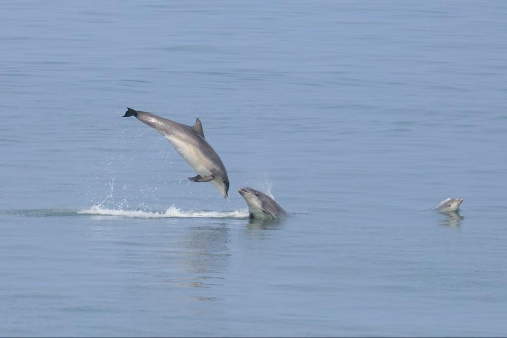Dolphins-21-09-16-d6e80aa
