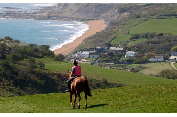 Dorset-horse-1051301