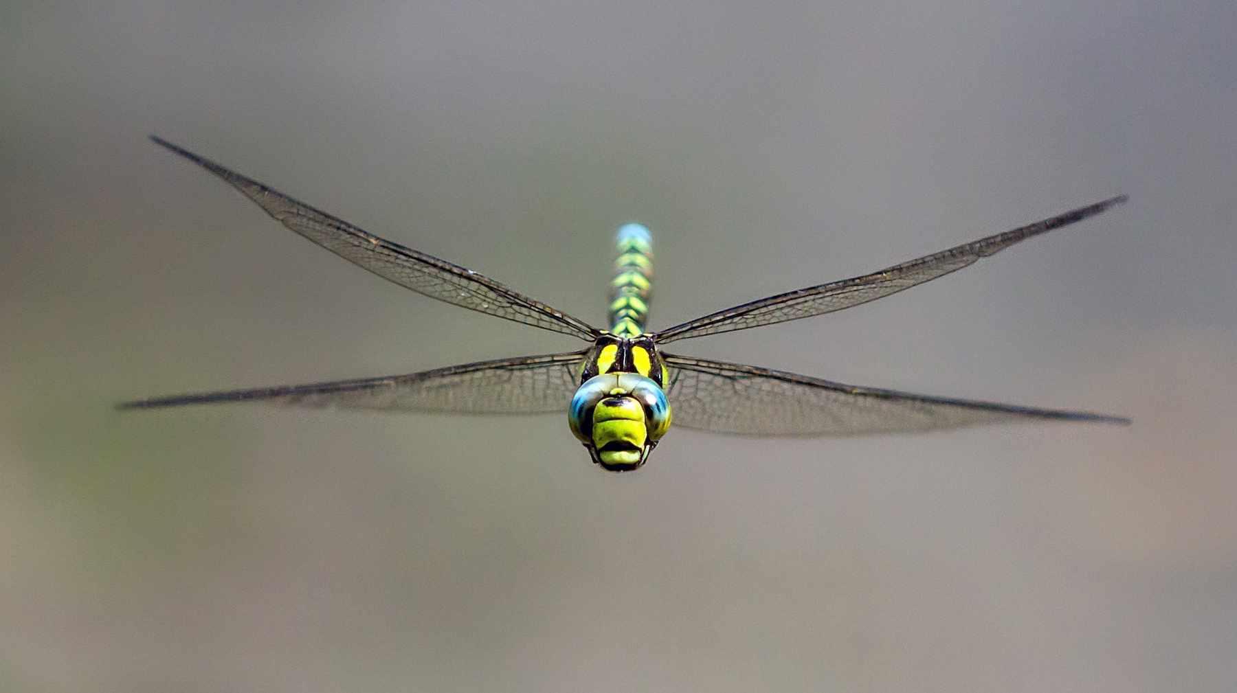 Dragonfly-8b1c12f