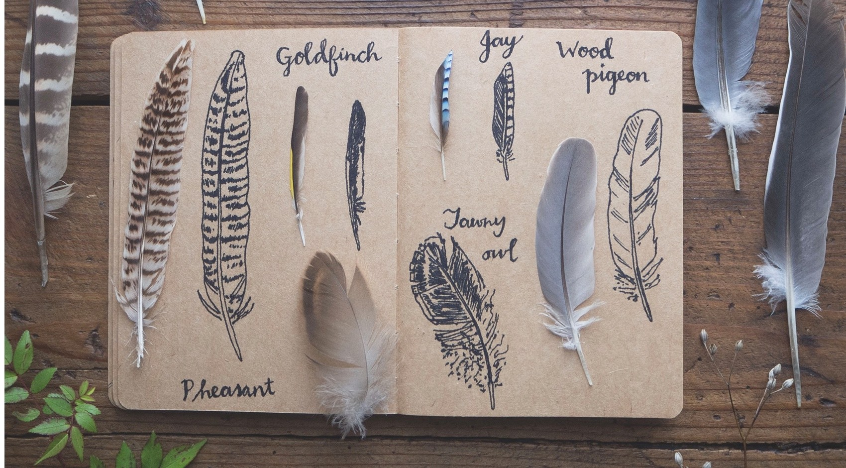 Drawing-feathers-1_0-ed3da66