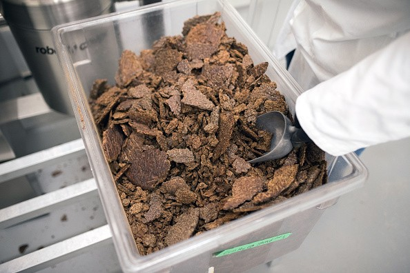 A worker scoops baked crickets into a grinder at the Entomo Farms processing facility in Norwood, Ontario, Canada, on Tuesday, May 29, 2018. In April, Maple Leaf Foods Inc. announced that it will be providing Series A funding to Entomo Farms, North America's largest farmer of insects for human consumption. Photographer: James MacDonald/Bloomberg via Getty Images