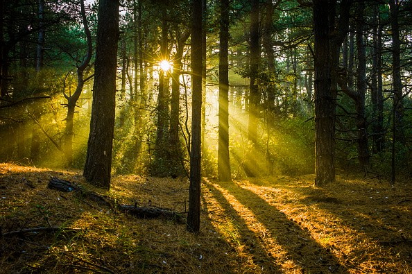 Early morning sunlight almost sets the woods alight. (Photo by: Loop Images/UIG via Getty Images)