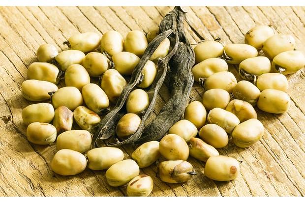 Fava-beans-5_0-9d8c52f