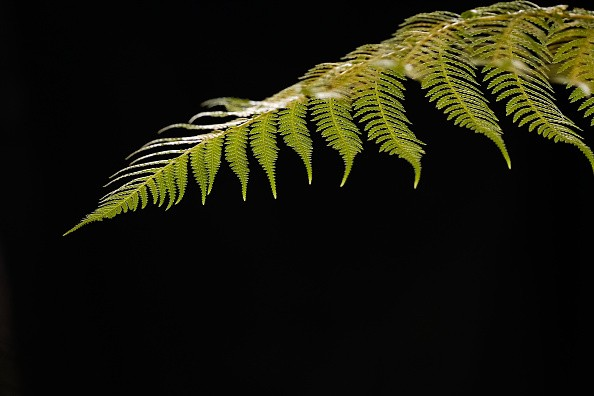 HARROGATE, ENGLAND - APRIL 25: A fern is lit by daylight from a roof window during staging day for the Harrogate Spring Flower Show on April 25, 2018 in Harrogate, England. Organised by the North of England Horticultural Society the show is one of two annual shows held at the Great Yorkshire Showground. The event attracts over 50,000 visitors and 1,000 exhibitors each year and the show includes show gardens created by professional and community groups, demonstrations offering practical tips, and a new plant pavilion offering plants from around 100 leading nurseries. There will also be hands on activities for families, floral art and live entertainment. (Photo by Ian Forsyth/Getty Images)