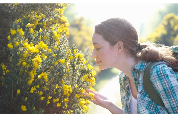 Flower-spotting-114996573-ab0795f