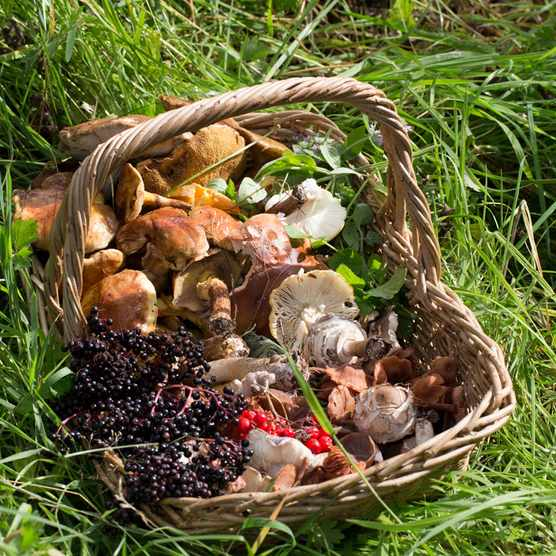 Foods-foraged-in-a-Yorkshire-country-park.Credit-Lucinda-Dransfield-dbc6871