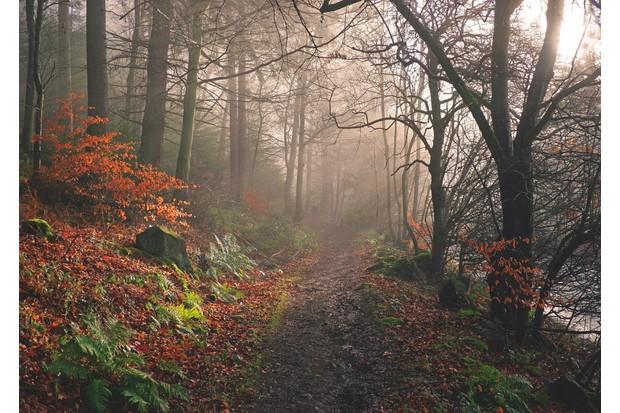 Footpath20through20Dodd20Wood2C20Bassenthwaite-f950b66