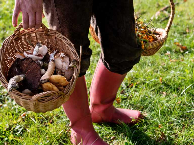 Monthly foraging guide: what's in season, where to find it, and how to forage responsibly