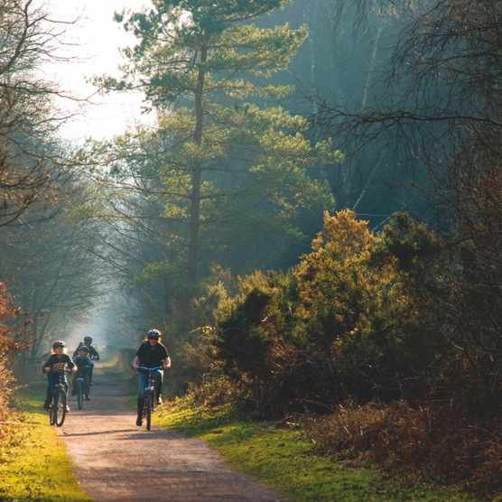 Forest of Dean cycling ©Getty