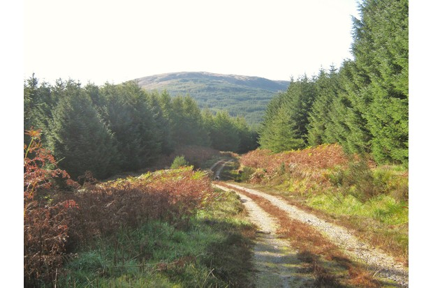 Galloway-forest-park-scotland-geograph-2284615-by-Ann-Cook-87a4f5a