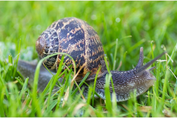Guide to Britain\'s slugs and snails: how to identify common species ...