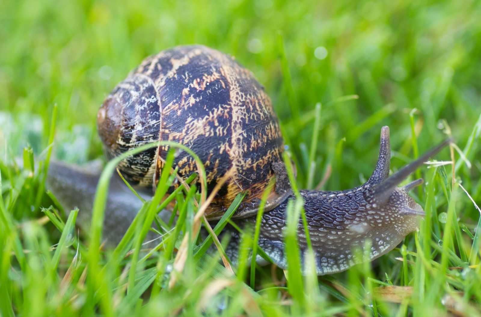 Garden-snail-61d70ba