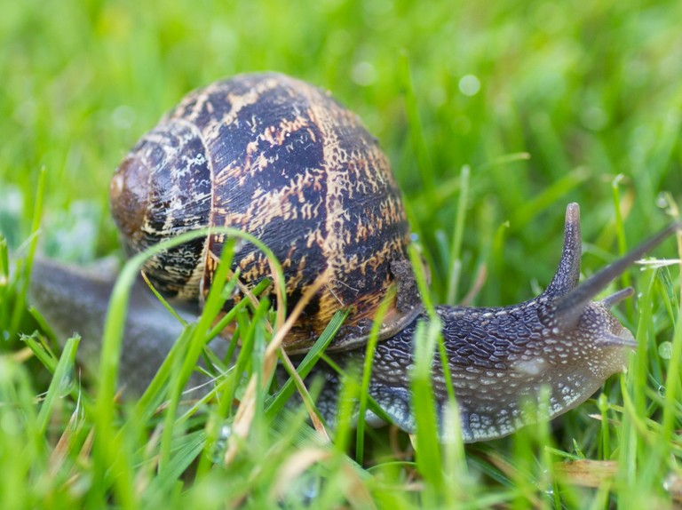 Guide To Britains Slugs And Snails How To Identify Common Species