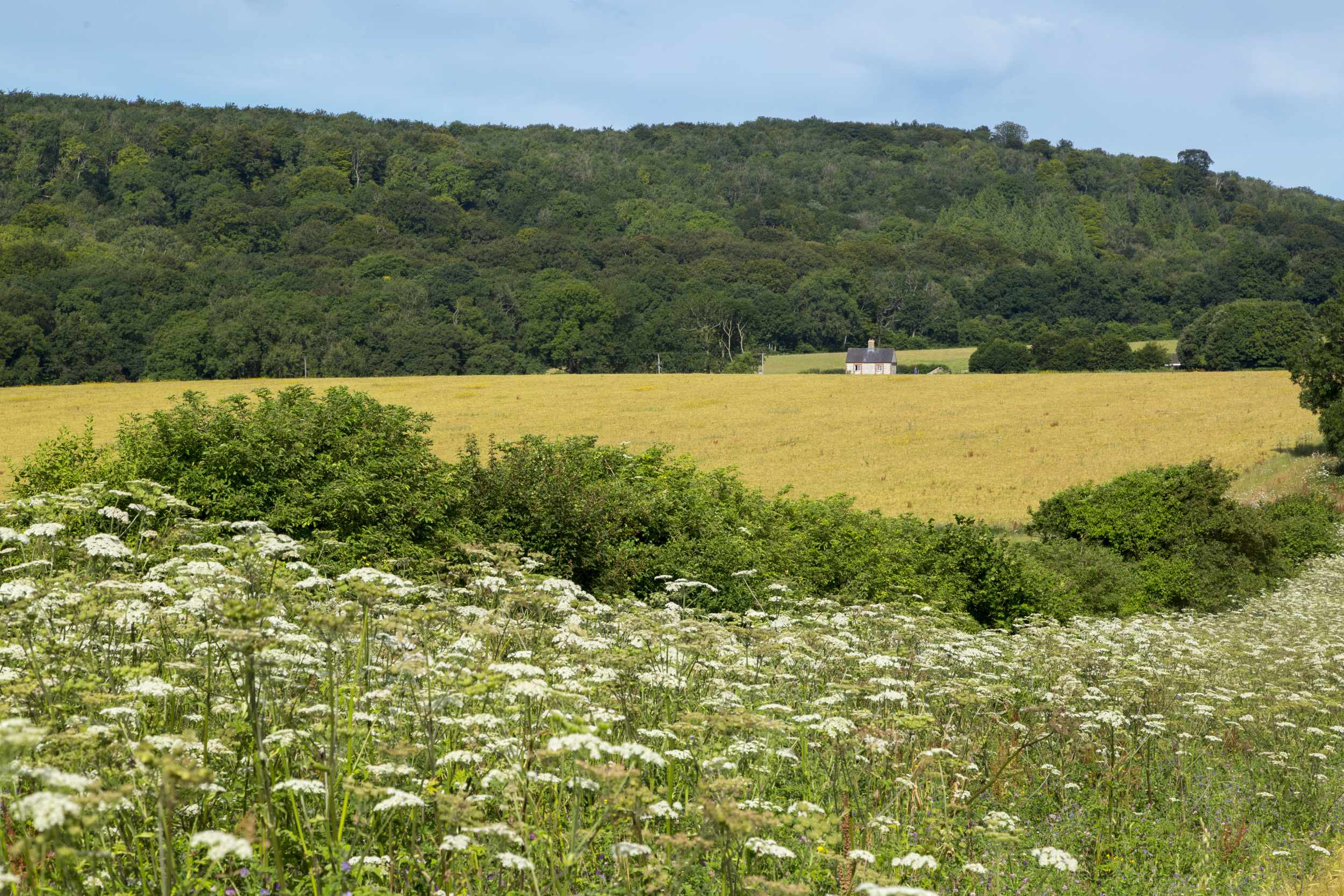 A wildflower margin at Courthill Farm, Slindon, West Sussex.
