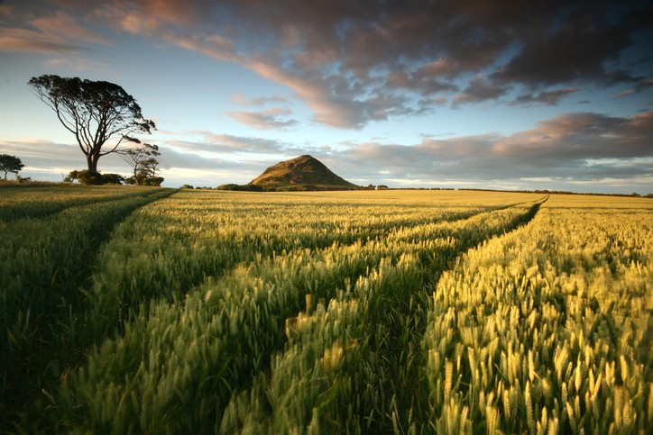 Across a field to the Law by North Berwick, East Lothian, Scotland