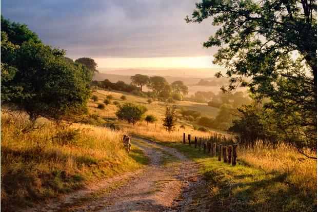 Countrylane in chiltern hills at dawn, Hertfordshire/Buckinghamshire border, England, UK.