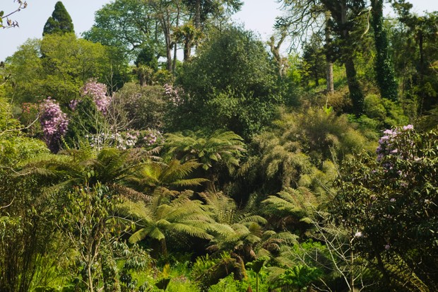 The woodland garden at the Lost Garden of Heligan, nr St Austell, Cornwall, Great Britain.