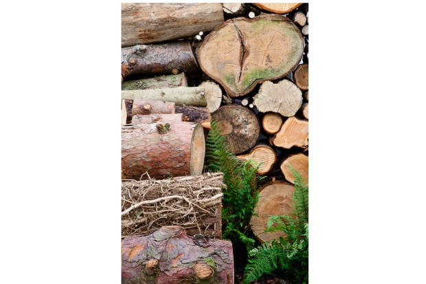 Second Nature Gardens, 1984, des. Anthony Cox, Chris Gutteridge & Jon Owens. Log pile with ferns