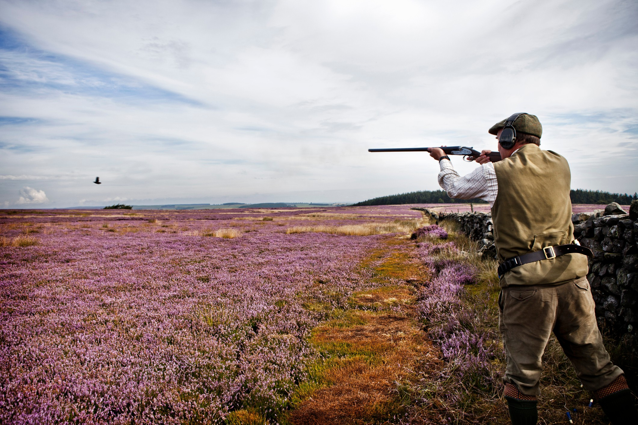 Man shooting birds in field of flowers