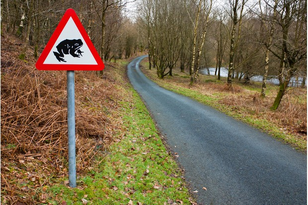 A Toad crossing sign besides a country lane and pond.