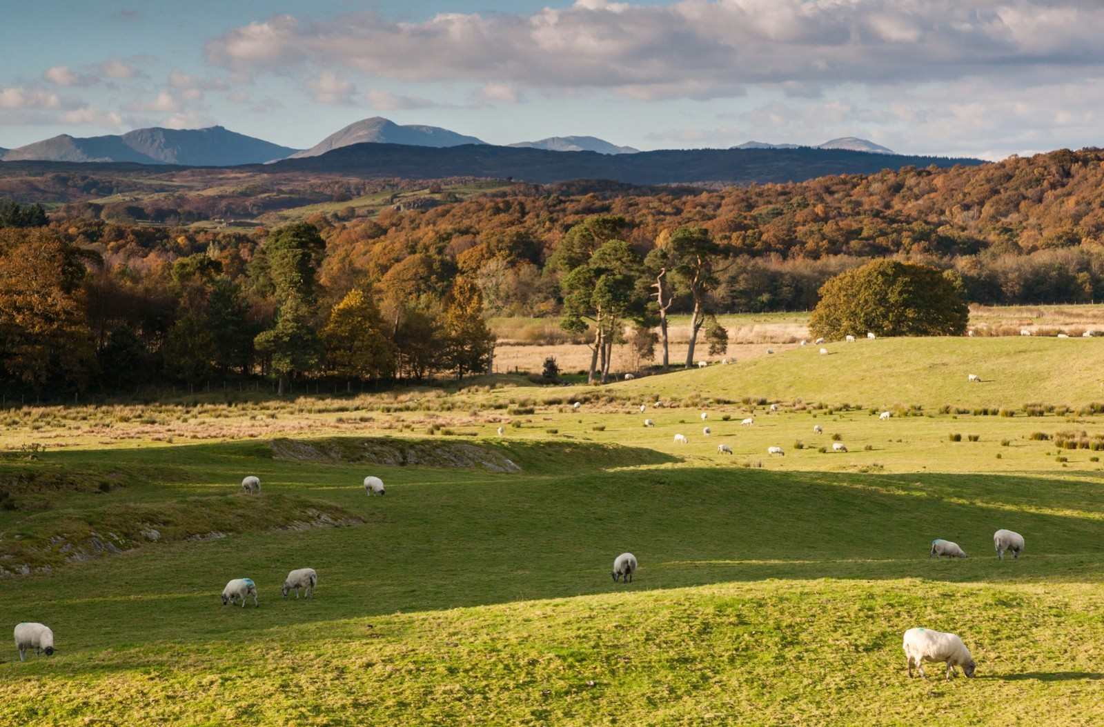 Weatherlam and The Old Man of Coniston in Autumn (Fall) viewed across Grizedale Forest