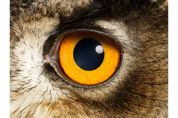 Eye of an Eagle Owl, close up